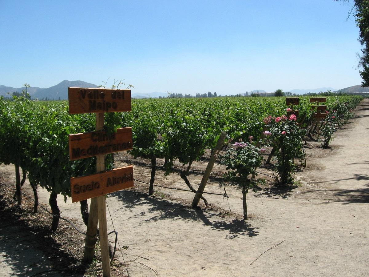 concha y toro winery tour