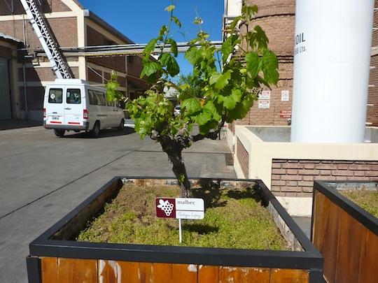 Classic Wine Tour Mendoza