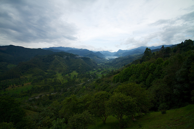 Cocora Valley, with its waxy palms, is one of the Coffee Triangle's many natural attractions