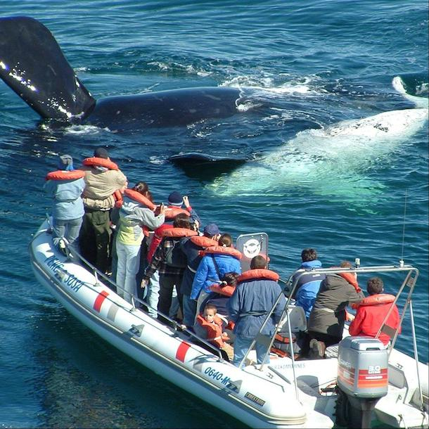 The semi-rigid boat used for whale watching in Puerto Madryn
