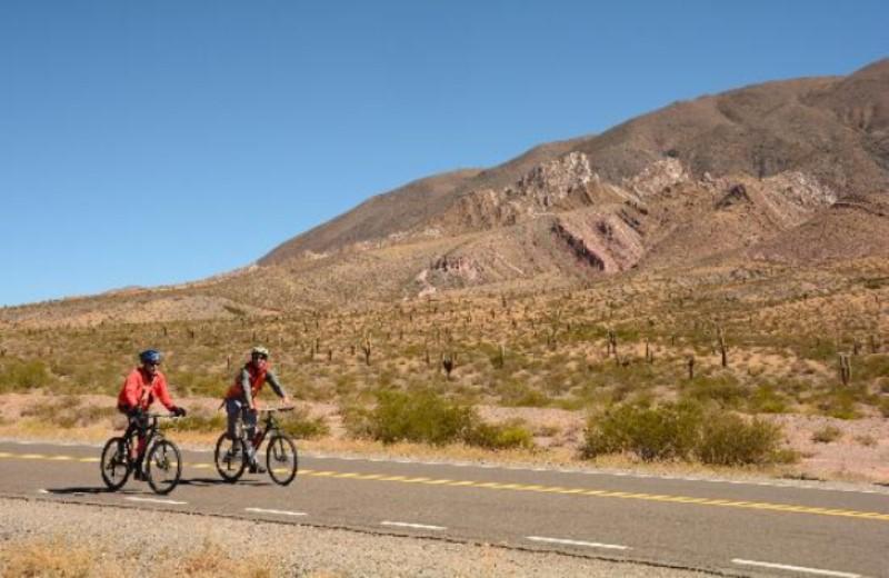 bike tour yungas salta