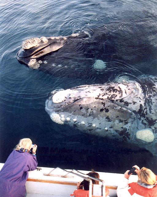 Puerto Madryn: à la rencontre de la faune du pôle