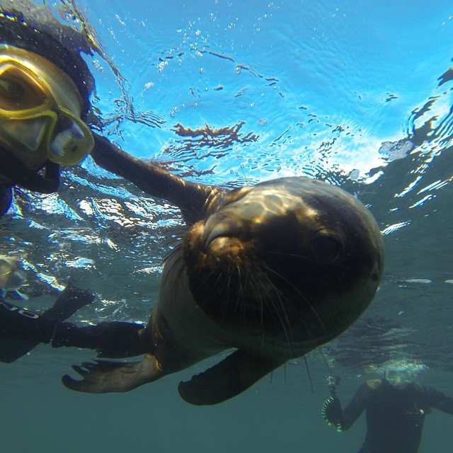 Selfie avec les lions de mer à Puerto Madryn / source